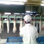 صادرات دستگاه تولید دستکش جراحی